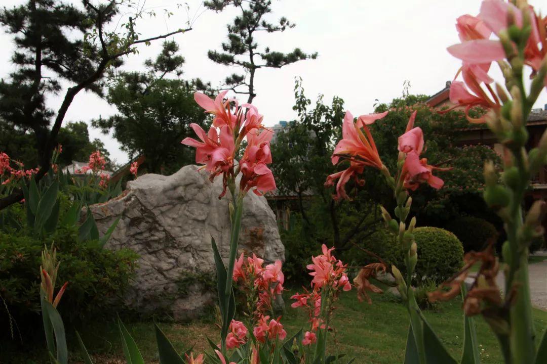 除了荷花,夏季来玄武湖还能看到……