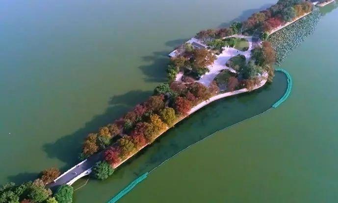 """层林尽染,秋天的玄武湖台菱堤""""火""""了!"""