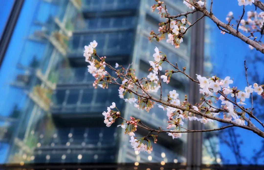这里春景独好!赏花观展两不误,等你来逛!