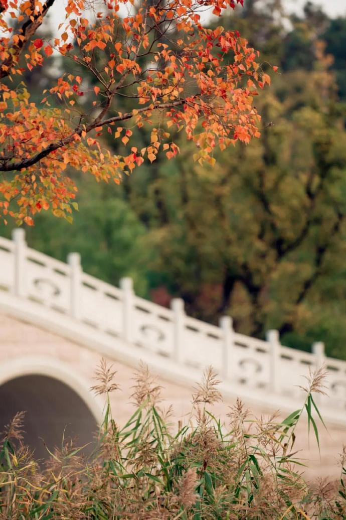 来牛首山,探寻秋之美