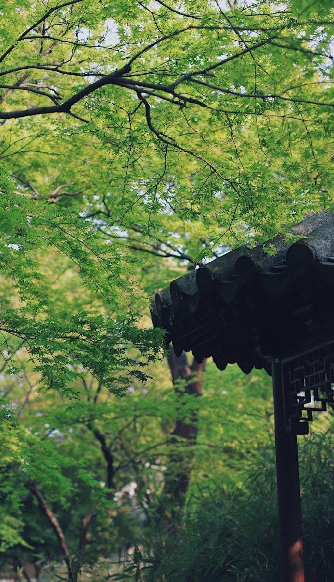 苏州留园·盛夏的绿 